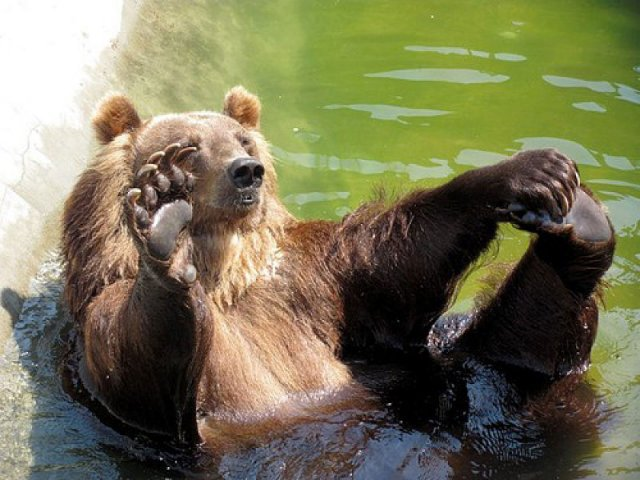 phoca_thumb_l_12_brown-bear.jpg