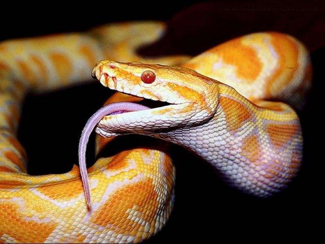 phoca_thumb_l_05_snake.jpg
