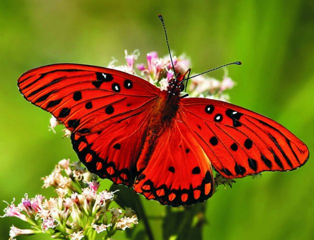 phoca_thumb_l_12_butterfly.jpg