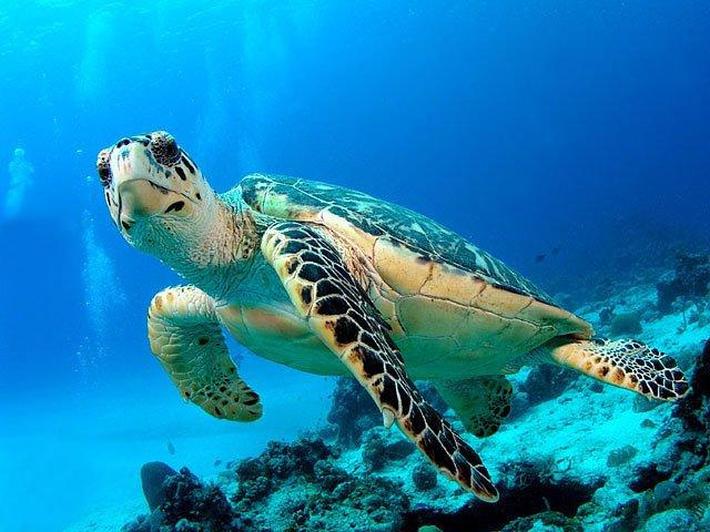 phoca_thumb_l_05_turtle.jpg